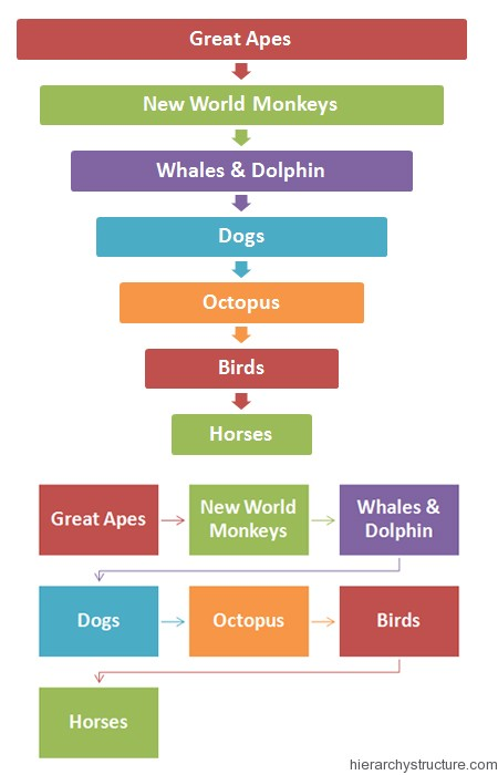 Animal Intelligence Hierarchy