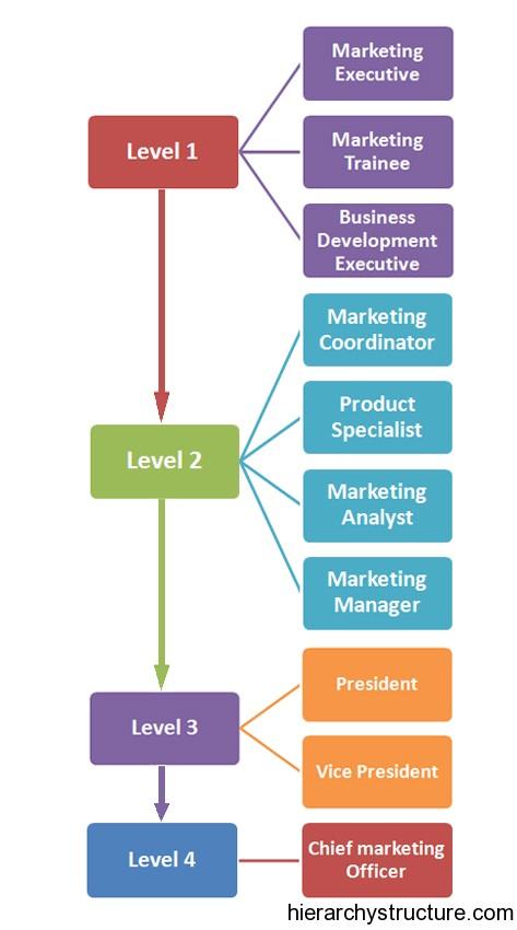 Marketing Career Hierarchy
