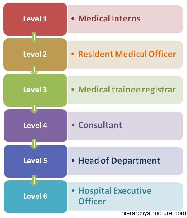 Medical Career Hierarchy