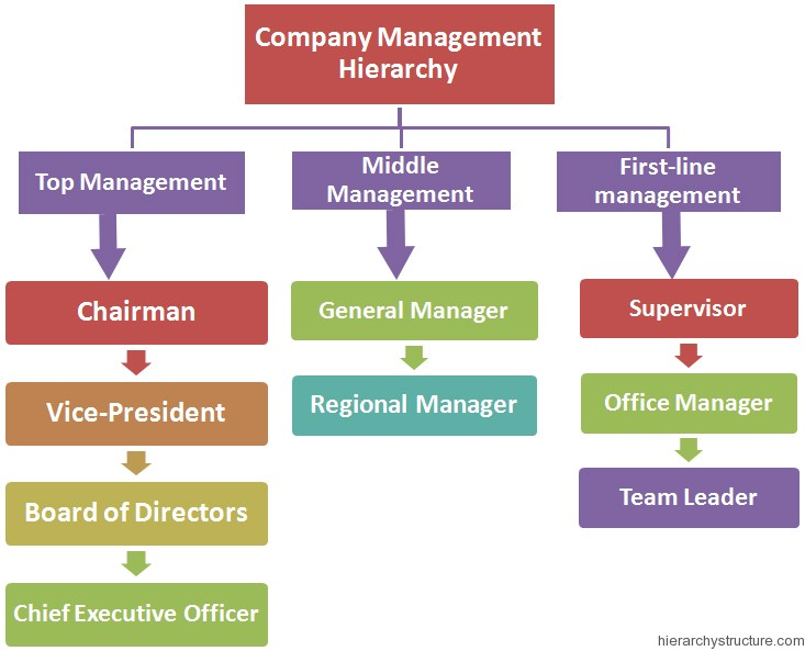Company Management Hierarchy