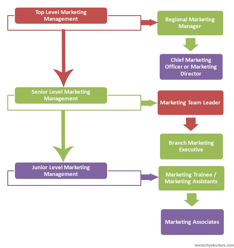 Marketing Management Hierarchy