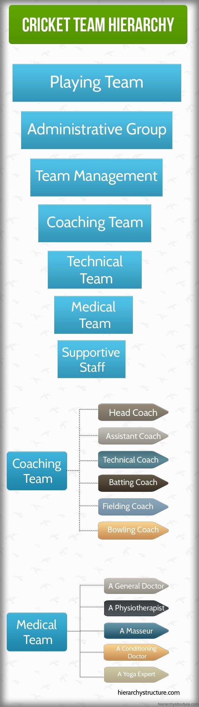 Cricket Team Hierarchy