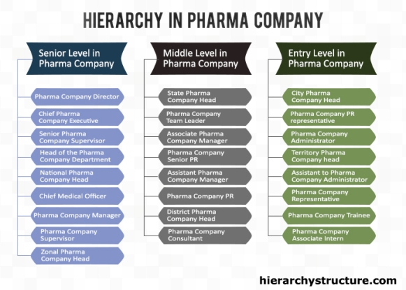 Hierarchy in Pharma Company