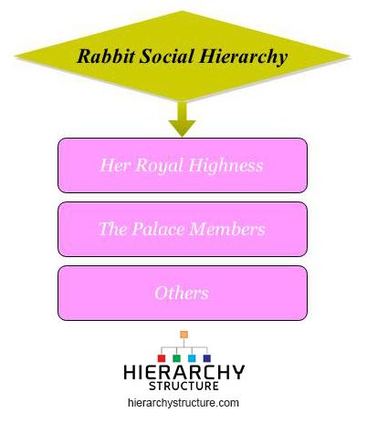 rabbit social hierarchy