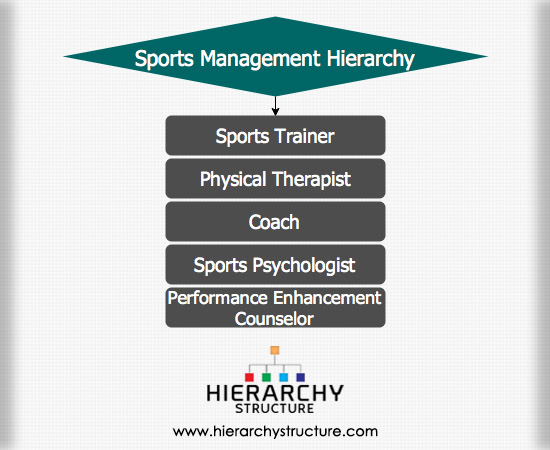 Sports Management Hierarchy