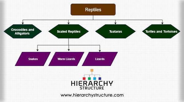 Reptile Hierarchy