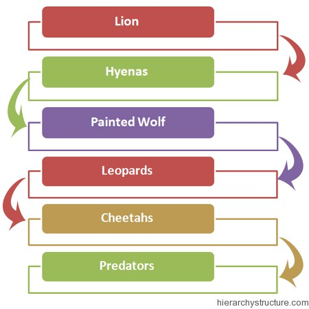 African Animal Hierarchy