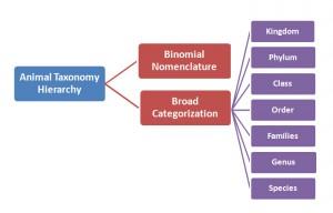 Animal Taxonomy Hierarchy