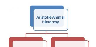 Aristotle Animal Hierarchy