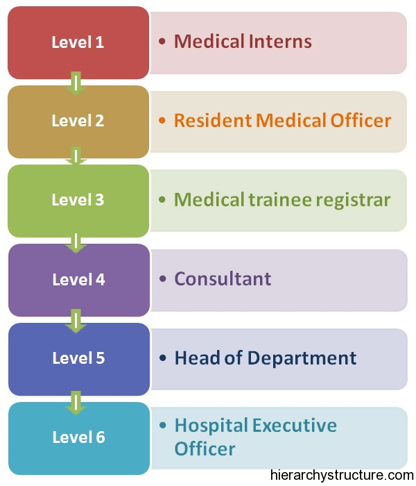Medical Career Hierarchy