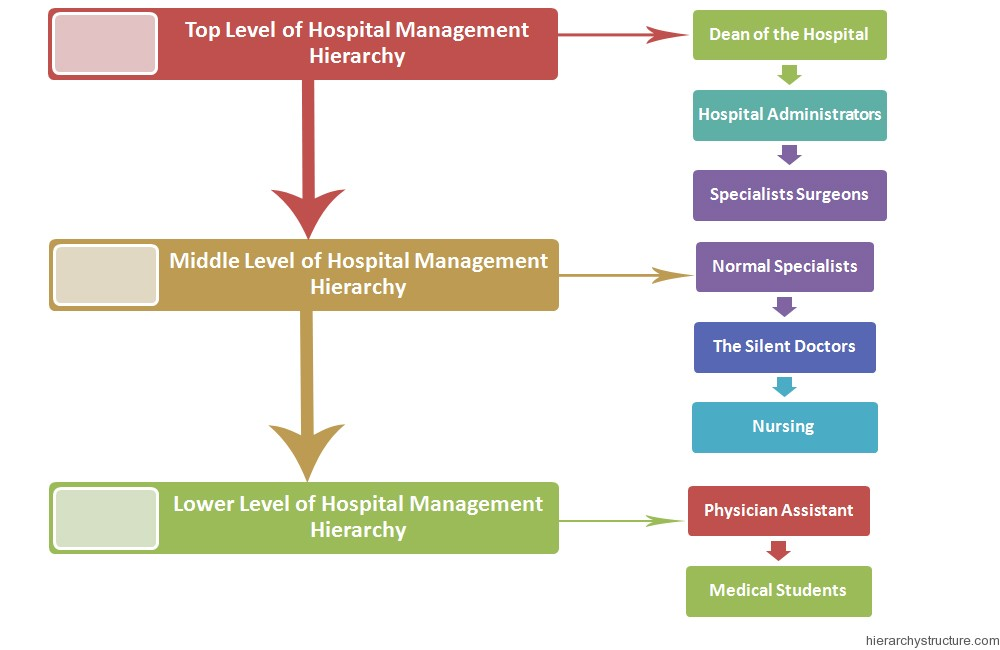 Hospital Management Hierarchy