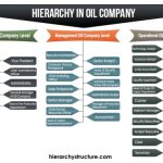 Hierarchy in Oil Company