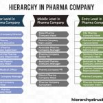 Hierarchy in Pharma Company