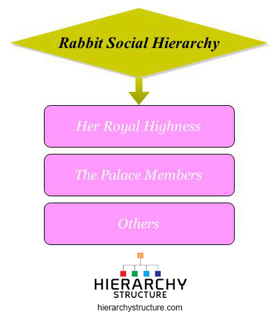 rabbit social hierarchy