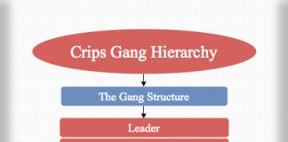 Crips Gang Hierarchy