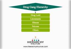 Drug Gang Hierarchy