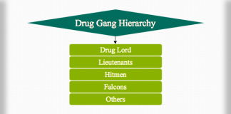 Drug Gang Hierarchy