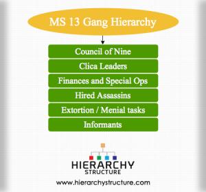 MS 13 Gang Hierarchy