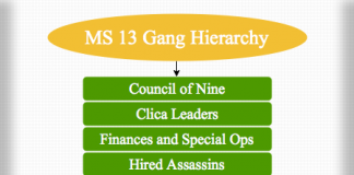 MS 13 Gang Hierarchy