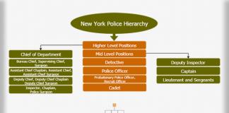 New York Police Hierarchy