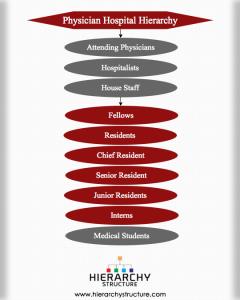 Physician Hospital Hierarchy