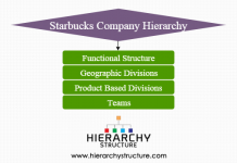 Starbucks company hierarchy