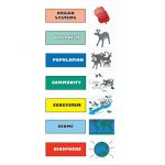 What is Hierarchical Organization Biology?